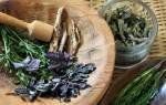 Травы для лечения при бронхите у взрослых