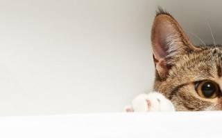 Почему котенок чихает и сопли