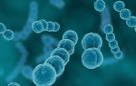 Стрептококк вириданс лечение антибиотиками