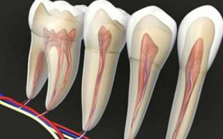 Застудил ноги болят зубы что делать