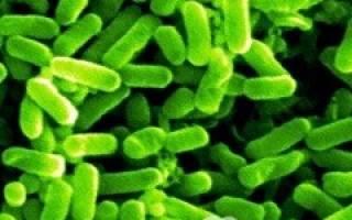 Эшерихиоз инфекционные болезни