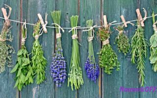 Лечебные травы от простуды